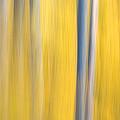 Forest Blur by Adam Pender