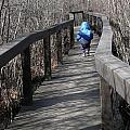 Forest Boardwalk In Winter by Angela Hansen