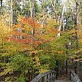 Forest Bridge by Lee Alexander