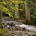 Forest Brook by Idaho Scenic Images Linda Lantzy