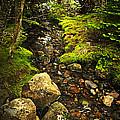 Forest Creek by Elena Elisseeva