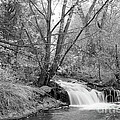 Forest Creek Waterfall In Black And White by James BO  Insogna