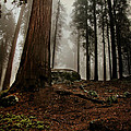 Forest Floor And Fog by Susan Gary