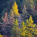 Forest Foliage  by Sarah Vandenbusch