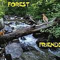 Forest Friends Sharing A Log Over A Creek On Mt Spokane by Ben Upham III