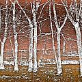 Forest Ghosts by Debra and Dave Vanderlaan