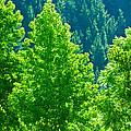 Forest Illuminates In The Sunlight  by U Schade