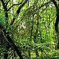 Forest In Denmark by Colette V Hera  Guggenheim