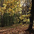 Forest In Fall by Michael Krekin