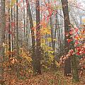 Forest In Late Autumn by John Burk