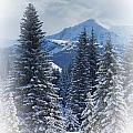 Forest In The Winter by Carson Ganci