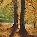 Forest Light by Robert Gary Chestnutt