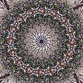Forest Mandala 5 by Rhonda Barrett