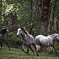 Forest Mares by Wes and Dotty Weber
