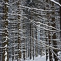 Forest Of Marburg In Winter by Axiom Photographic