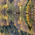 Forest Reflected In A Loch by Adrian Bicker