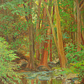 Forest Reflections by Phyllis Tarlow