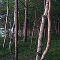 Forest, Shore Of Lake Superior by Ted Kinsman