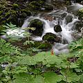 Forest Stream by Doug Lloyd