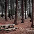 Forest Table by Carlos Caetano