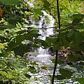 Forest Waterfall by Jost Houk