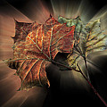 Forever Autumn by Debra and Dave Vanderlaan