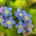 Forget-me-not Flower by Dragica  Micki Fortuna