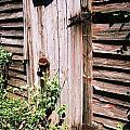 Forgotten Door by Lauren Nicholson