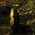 Forgotten Gatepost by Peter Jenkins