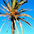 Fornells Palm Tree  by John Colley