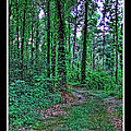 Forrest Trail by Debbie Portwood