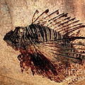 Fossil by Ellen Cotton