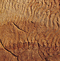 Fossilised Water Ripples In Sandstone by Jason Edwards