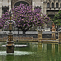 Fountain And Tree by Mary Machare