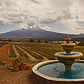 Fountain At Shasta Lavender Farm by Mick Anderson