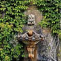 Fountain In The Walled Garden, Florence by The Irish Image Collection