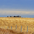 Four Outbuildings In The Field by Randy Harris