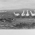 Fox & Geese, 19th Century by Granger