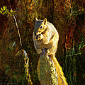 Fox Squirrel Sitting On Cypress Knee by J Larry Walker