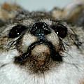 Foxy Eyes by LeeAnn McLaneGoetz McLaneGoetzStudioLLCcom