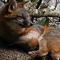 Foxy's Naptime by Trish Tritz