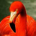 Fractalius Flamingo by Chris Thaxter