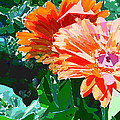 Fractured Gerber Daisies by Elaine Plesser