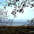 Framed On Penobscot Bay by Ruth Bodycott