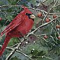 Franci's Cardinal by Sam Sidders