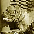 Frank The Dog 7827 In Sepia by Maciek Froncisz
