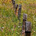 Fredricks Meadow by Mitch Shindelbower