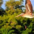 Free Flight by Barry R Jones Jr