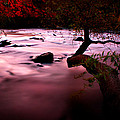 French Broad River In Fall by Gray  Artus
