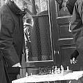 French Checkmate by Jennifer Sabir